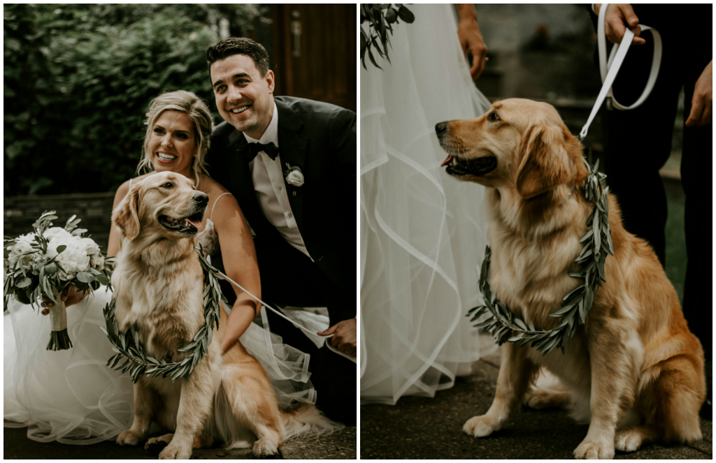 Golden Retriever Wedding Photos